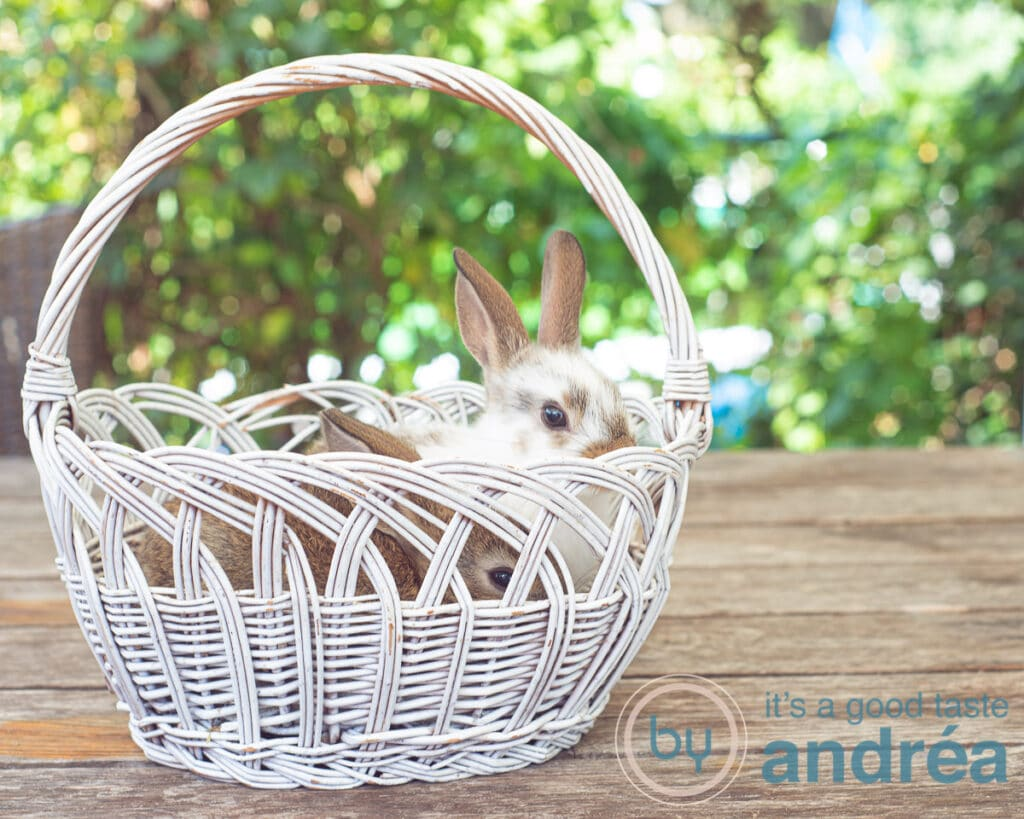 two bunnies in a basket